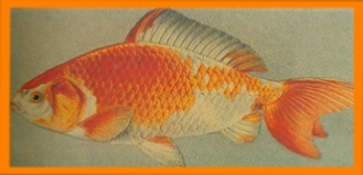Carp like fish dating 6