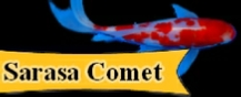 Sarasa Comet Goldfish Information