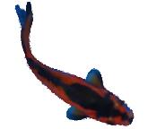 Special Comet Goldfish
